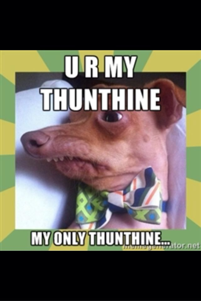 Good Morning My Sweet Sunshine Phteven Tuna Dog Haha Funny