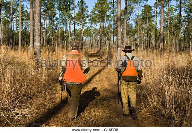 upland-bird-hunters-walking-down-dirt-road-during-a-bobwhite-quail-c16fr8.jpg (640×445)