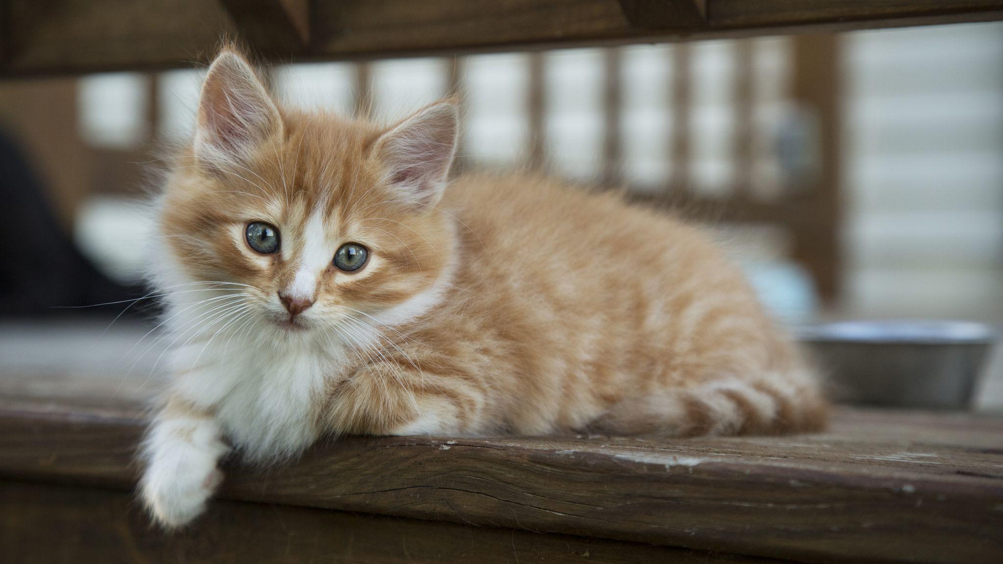 Rowdy8 Kittens Cutest Pretty Cats Cute Cats Kittens