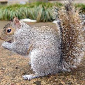 Squirrels And Chipmunks Garden Pests Organic Gardening Tips