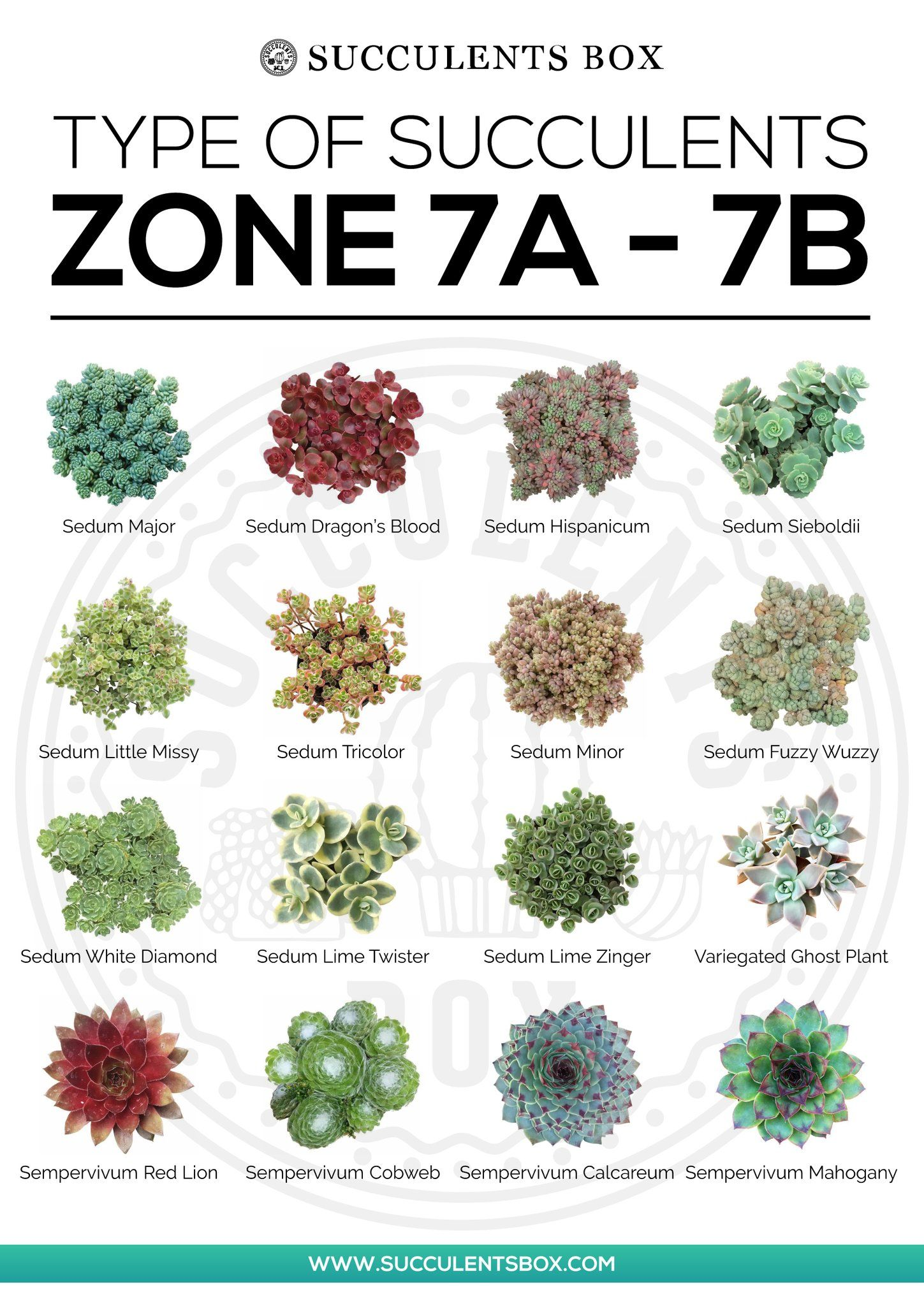 Photo of CHOOSING SUCCULENTS FOR ZONE 7 & 8 – TEXAS, GEORGIA, VIRGINIA AND NORTH CAROLINA