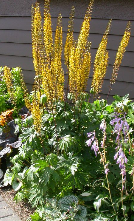 The 10 Best Plants for Your Pacific Northwest Garden | Garden ...