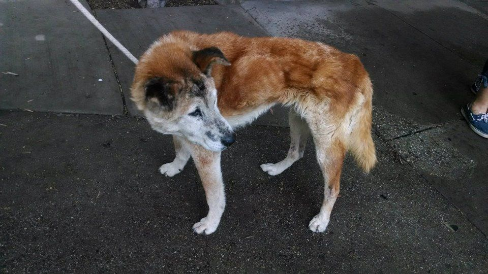Urgent A4680691 My Name Is Spotty I Am 15 Yr Old Female Red