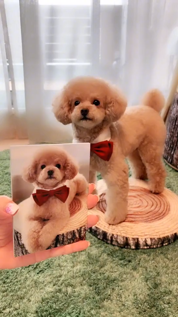 Pin By Nancy Lascano Intra Lifestyles On Funny And Cute Animals That Will Melt Your Heart Video Cute Animals Cute Baby Animals Cute Dogs
