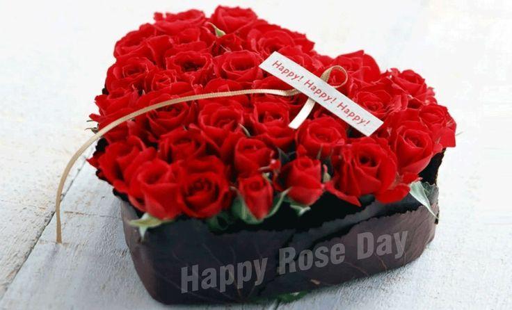 ❤ Valentine's Day Offer ❤