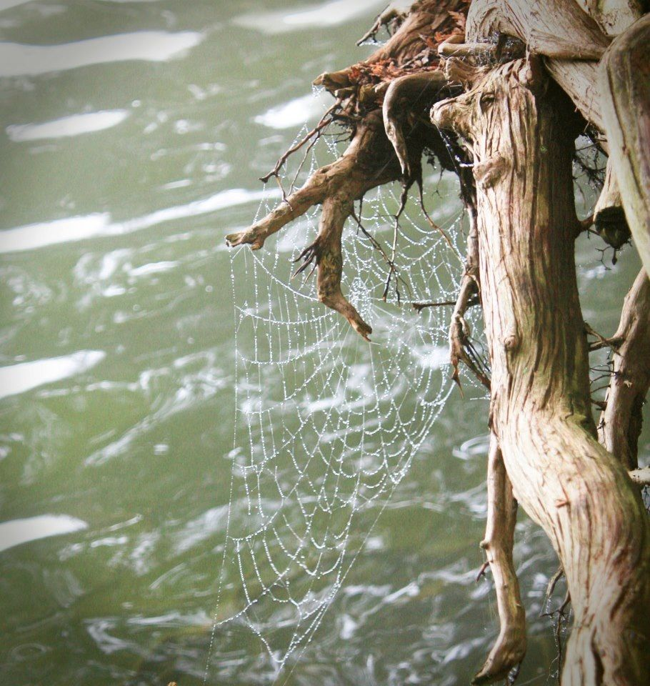 Spider web over the water