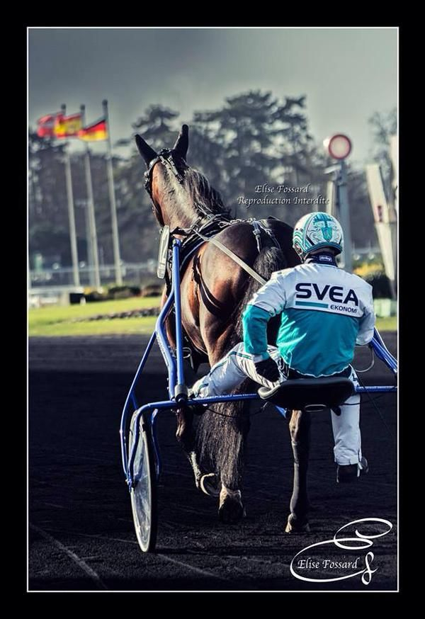 Pin By Vanessa On Harness Racing