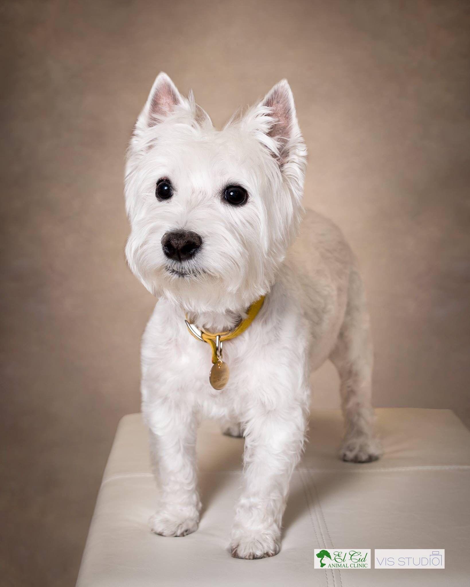 El Cid Animal Clinic Pet Photographer Pet Photography Dog Photographer Dog Photos Dog Photography Palm B Dog Photograph Animal Photography Dog Photography