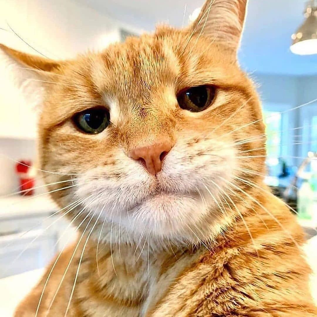 Master Kitties On Instagram My Face When I M Bored At Home Follow Kitties Master Follow The Page For More Pi Gambar Kucing Lucu Kucing Kucing Lucu