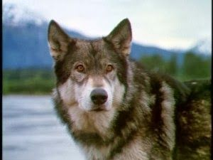 white fang 2 myth of the white wolf watch online