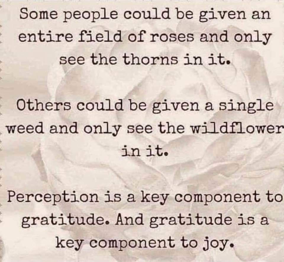 Pin by Emery Toth on Truth Psychology quotes, How to