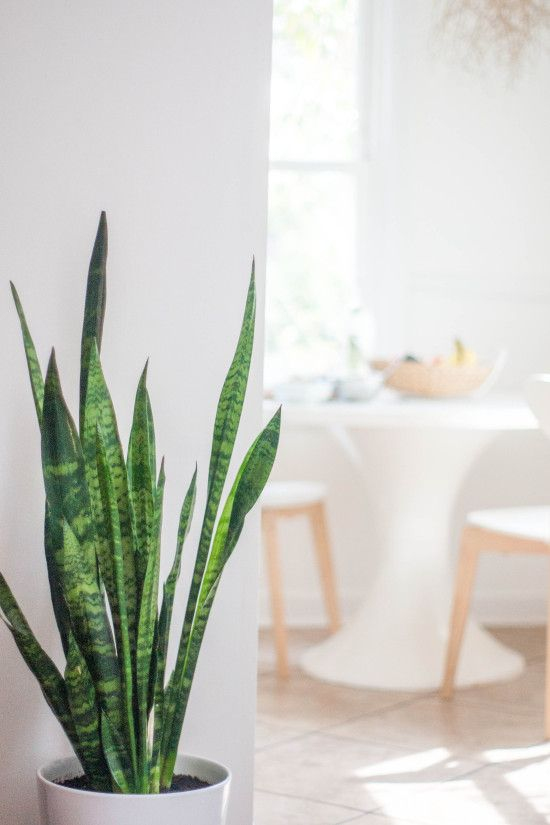 Home Tour With Natural Elements Modern Design And Bright White Rooms Plant Decor Indoor House Plants Indoor Mother In Law Tongue