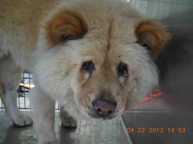 California Urgent Ida1386339 Is A Senior Adoptable Female