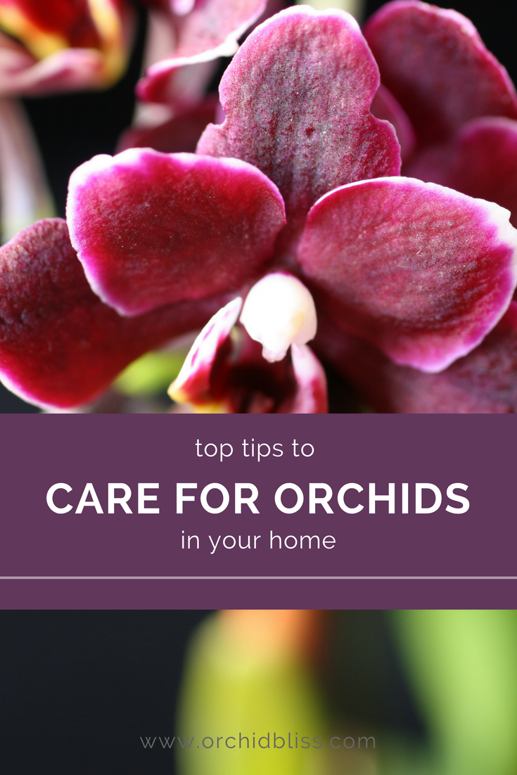 Caring For Orchids At Home Smart Tips For Growing Orchids Orchid Care Indoor Orchids Growing Orchids