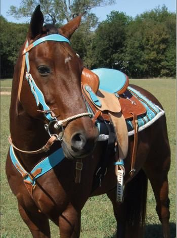 All Dressed Up In Western Tack In Bright Baby Blue Tack Jfvdvakchekdd 3 Western Horse Tack Western Horse Horse Tack