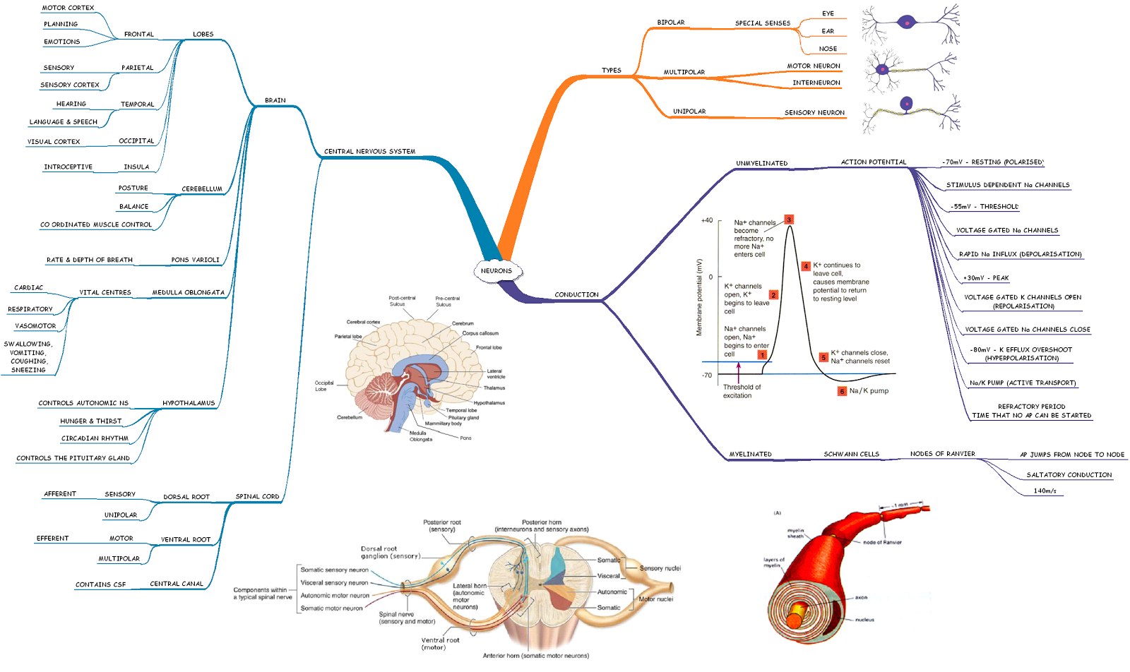 mind mapping aqa infectious diseases Google Search