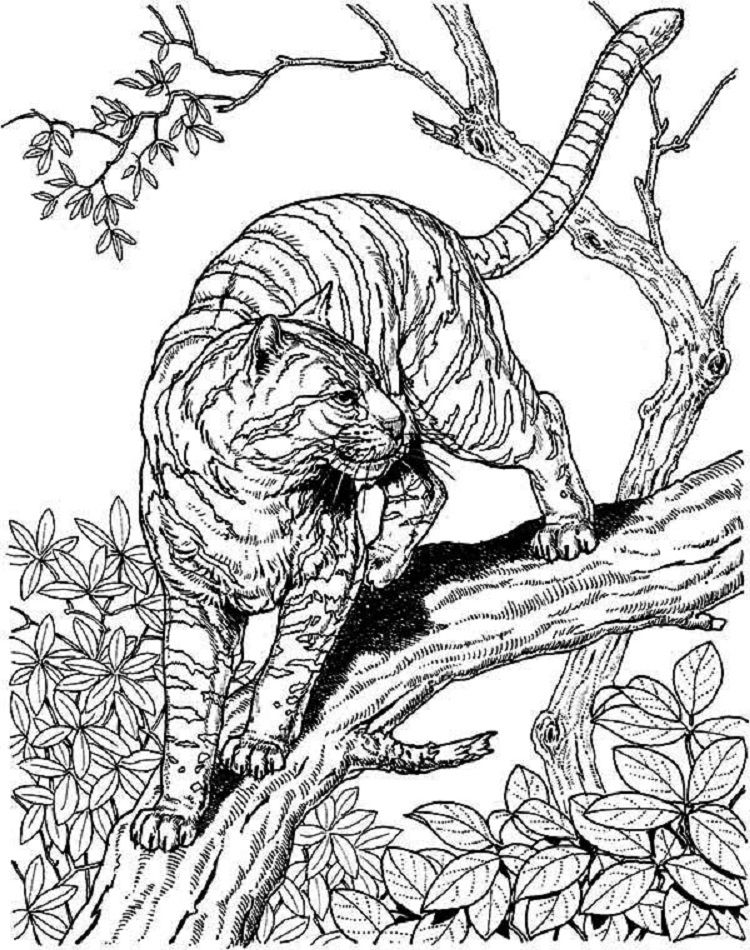 Cat Coloring Pages Hard Cat Coloring Page Detailed Coloring Pages Owl Coloring Pages