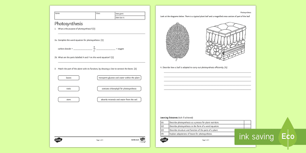 KS3 Photosynthesis Homework Activity Sheet Homework
