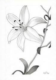 Pin De Llitastar En Dibujos Flores Dibujadas A Lapiz Flores A Lapiz Dibujos De Flores