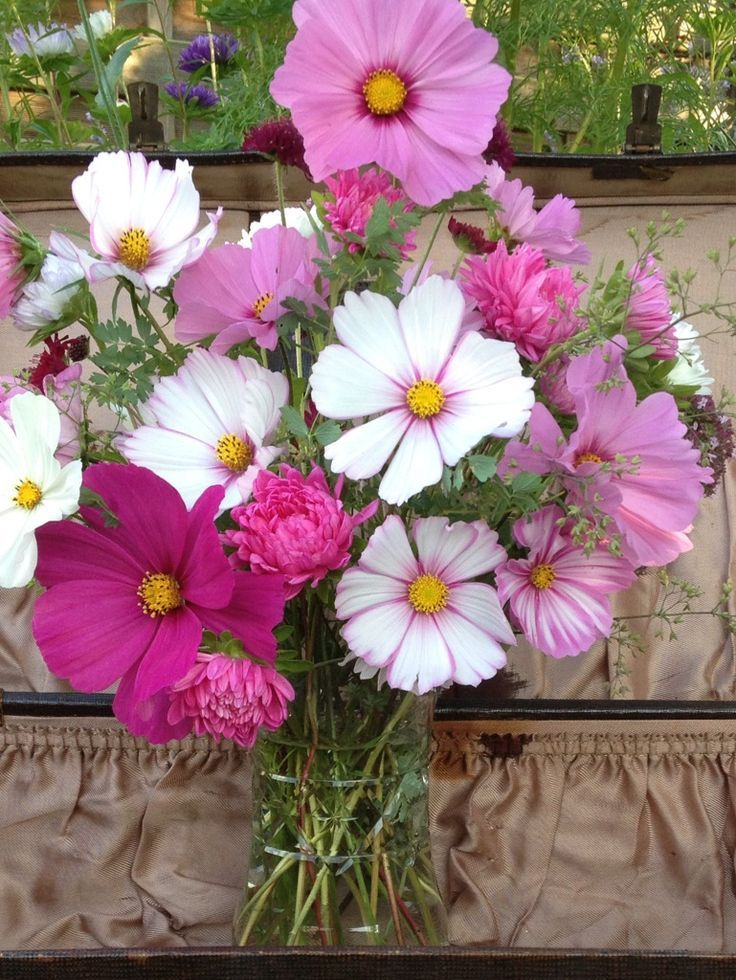 Image result for cosmos flower bouquet | Cosmos flower | Pinterest ...