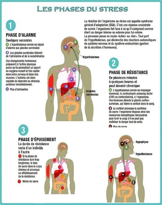 le stress sur le corps