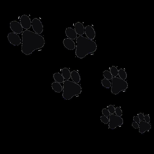 Free Image On Pixabay Footprint Animal Cat In 2021 Paw Print Art Dog Paw Print Footprint