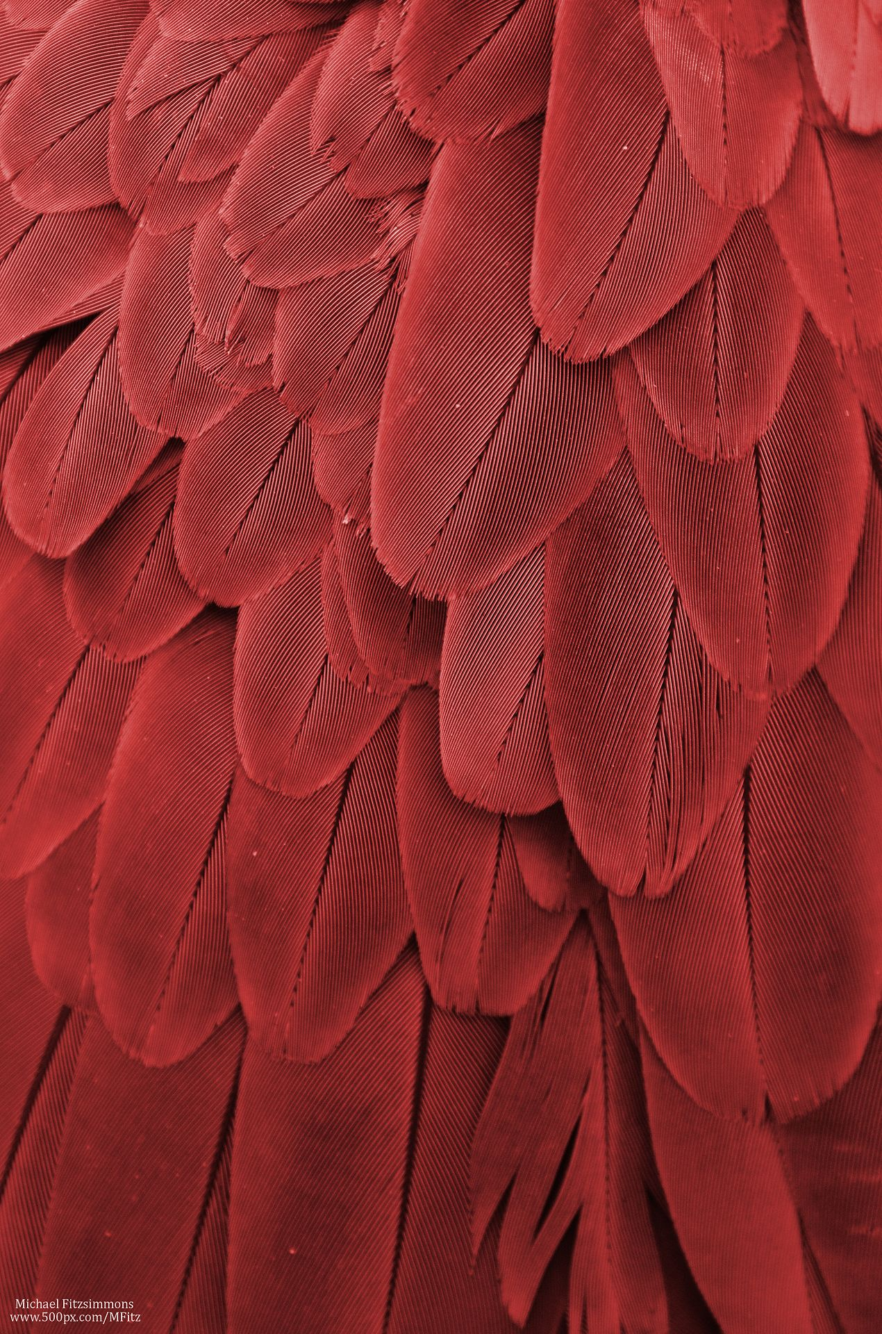 roter teppich texture