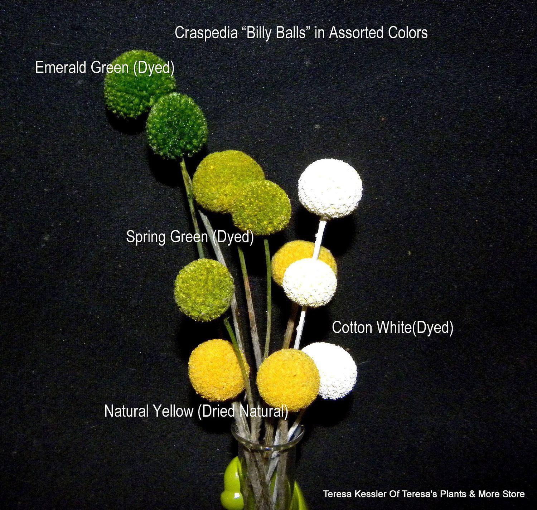 Emerald Green New Color Craspedia Billy Balls Billy Buttons Emerald Green Wedding Flowers Emerald Green Weddings Green Wedding Flowers Billy Buttons
