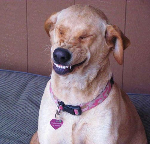 The Holidog Times On Hilarious Dog And Animal - Hilarious photographs faces pulled sneezing dogs cats