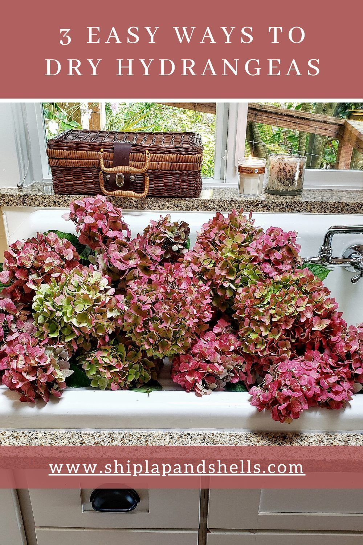 3 Easy Ways To Dry Hydrangeas In 2020 Dried Hydrangeas Hydrangea Not Blooming Hydrangea