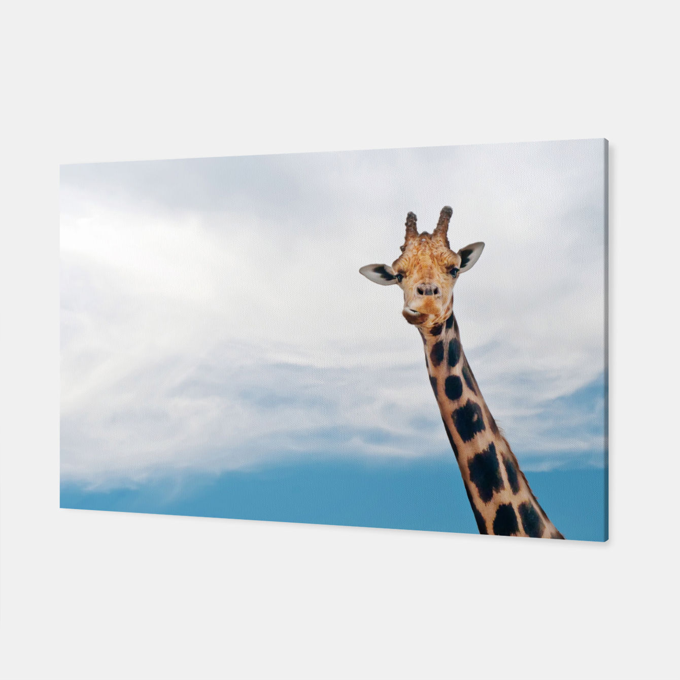 Giraffe neck and head against the clear blue sky Canvas