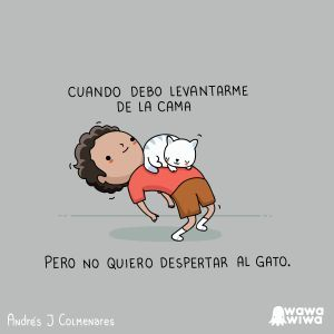 Sin Despertar Al Gato Cat Quotes Funny Funny Memes Spanish Jokes