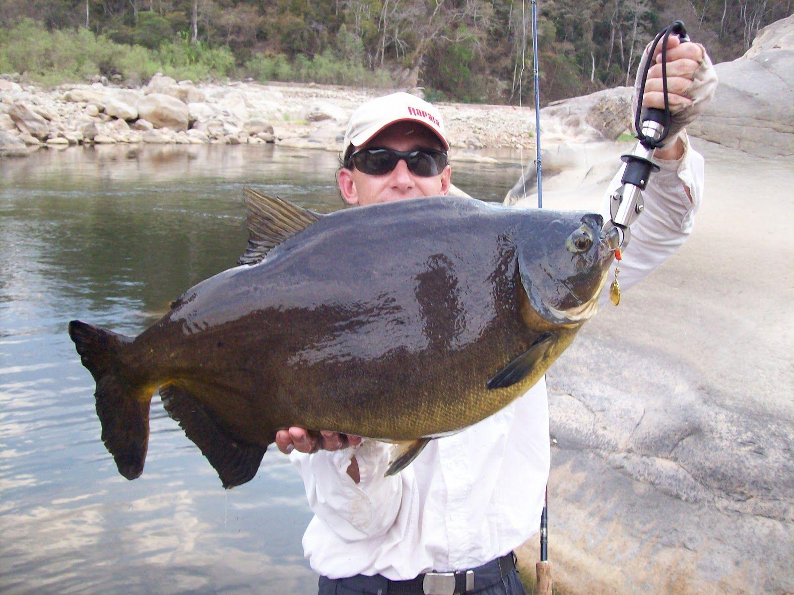 Freshwater Fishing Trends January 18 2019 Information on fishing trends provided courtesy of wwwanglersheadquarterscom South Carolinas premier fishing report
