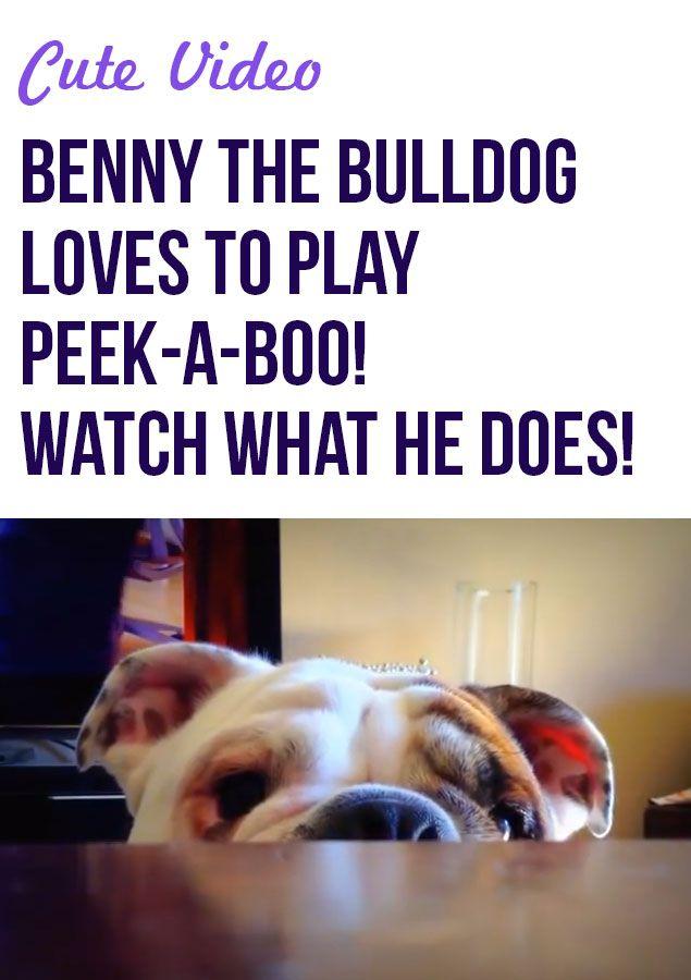 Benny The Bulldog Loves Peekaboo Bulldog Boxer Bulldog Funny Animals