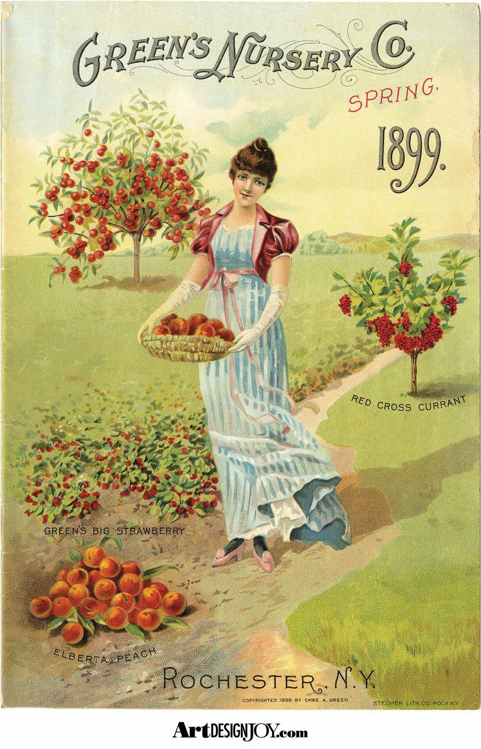 Free Printable Of A Beautiful 1899 Green S Nursery Catalog In Garden Freebies At Artdesignjoy