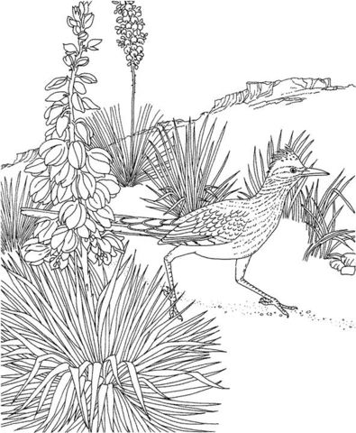 Roadrunner and Yucca New Mexico State Bird and Flower Coloring page ...