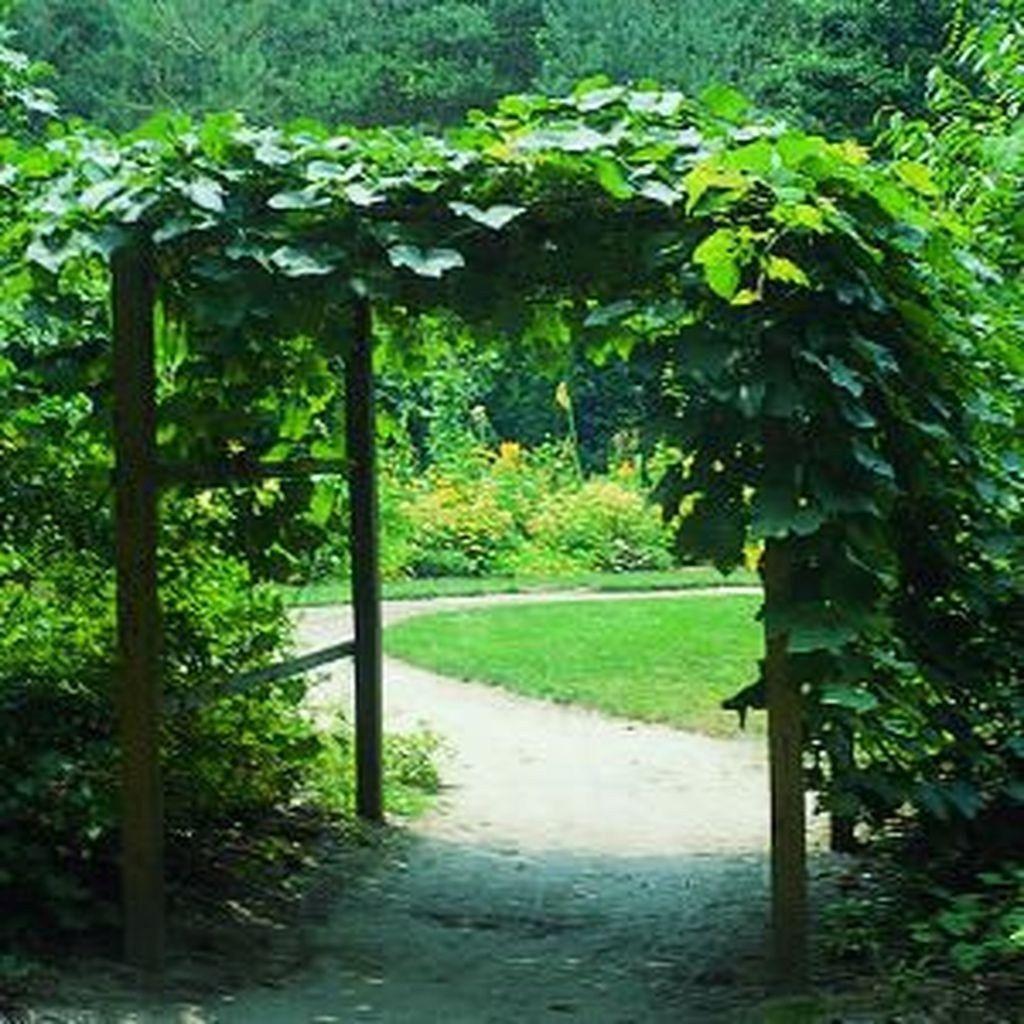 40 Inspiring Grape Vine Ideas To Beautify Your Garden
