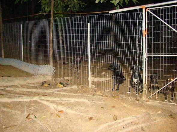 Área externa ao canil já pronta com os cães soltos