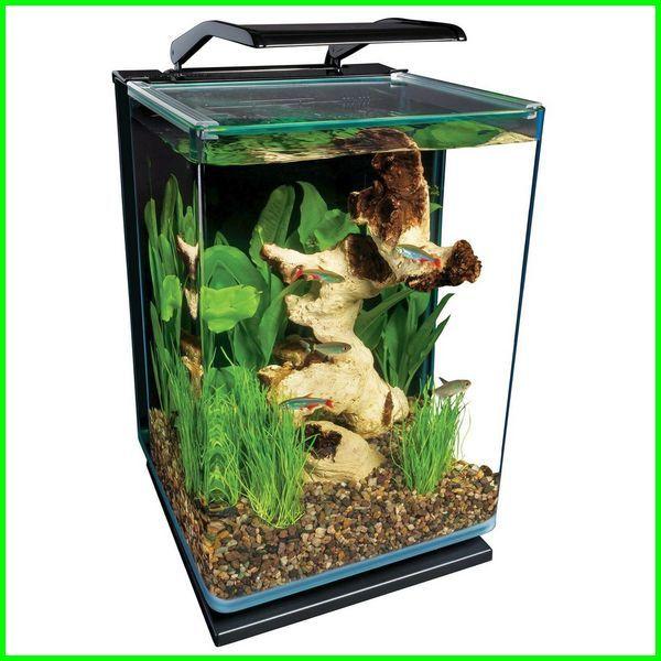 Nyari Aquarium Ikan Cupang Keren Ini Rekomendasi Terbaik Daftarhewan Com Di 2020 Aquarium Ikan Aquarium Aquaponics