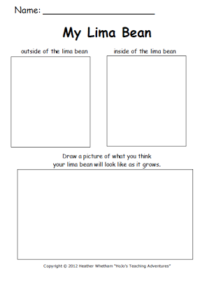 My lima bean diagram auto electrical wiring diagram lima bean experiment printable help your youngest learners rh pinterest com bean seed diagram bean plant ccuart Image collections