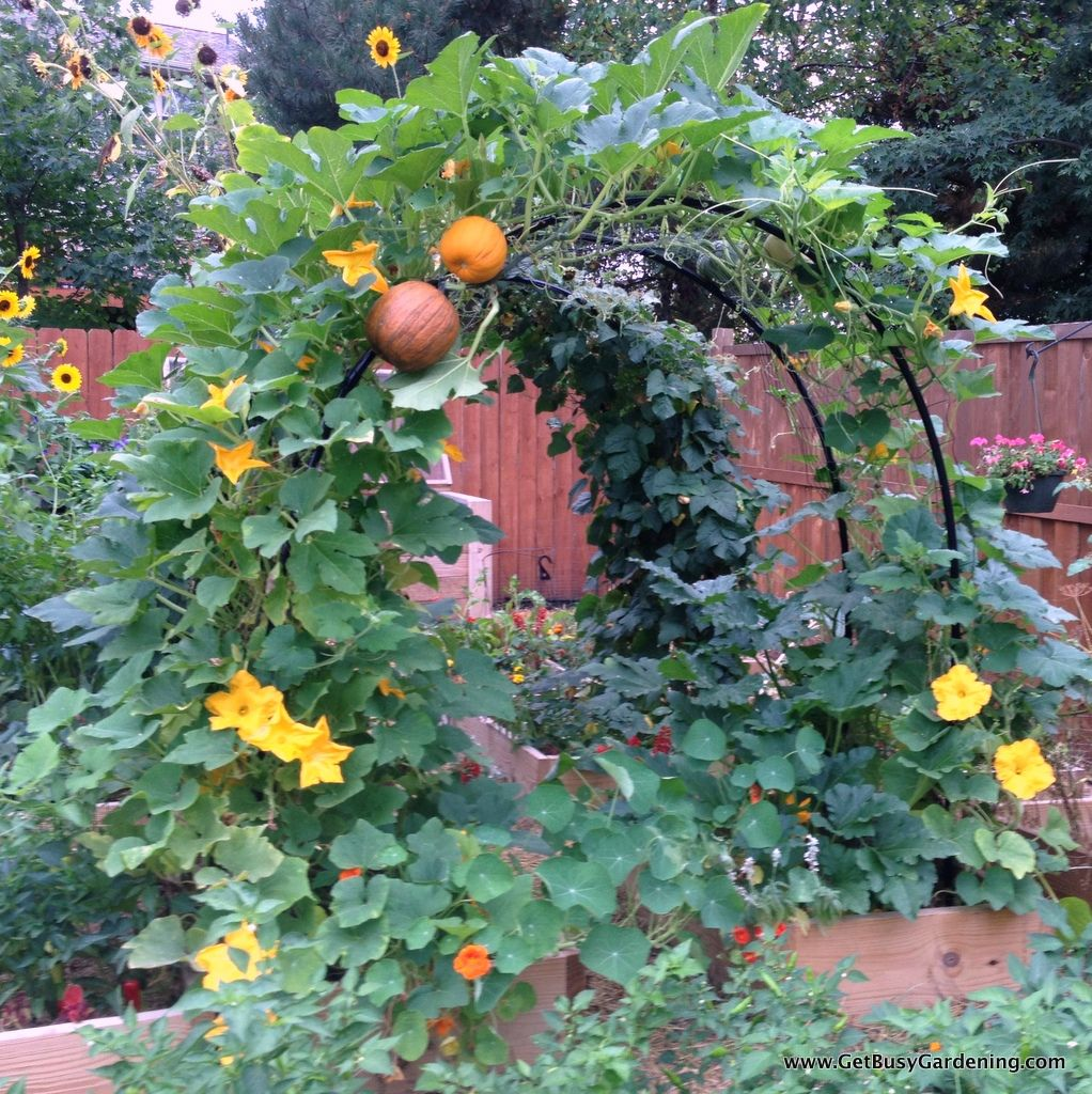 35 Advantageous Small Vegetable Garden Ideas For Your: How To Build A Squash Arch For Your Garden