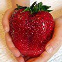 ADB Inc Rarest Heirloom Super Giant Japan Red Strawberry Organic Seeds