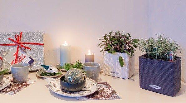 Verse Kruiden Keuken : Hoe verzorg ik verse kruidenplanten artikel kitchen