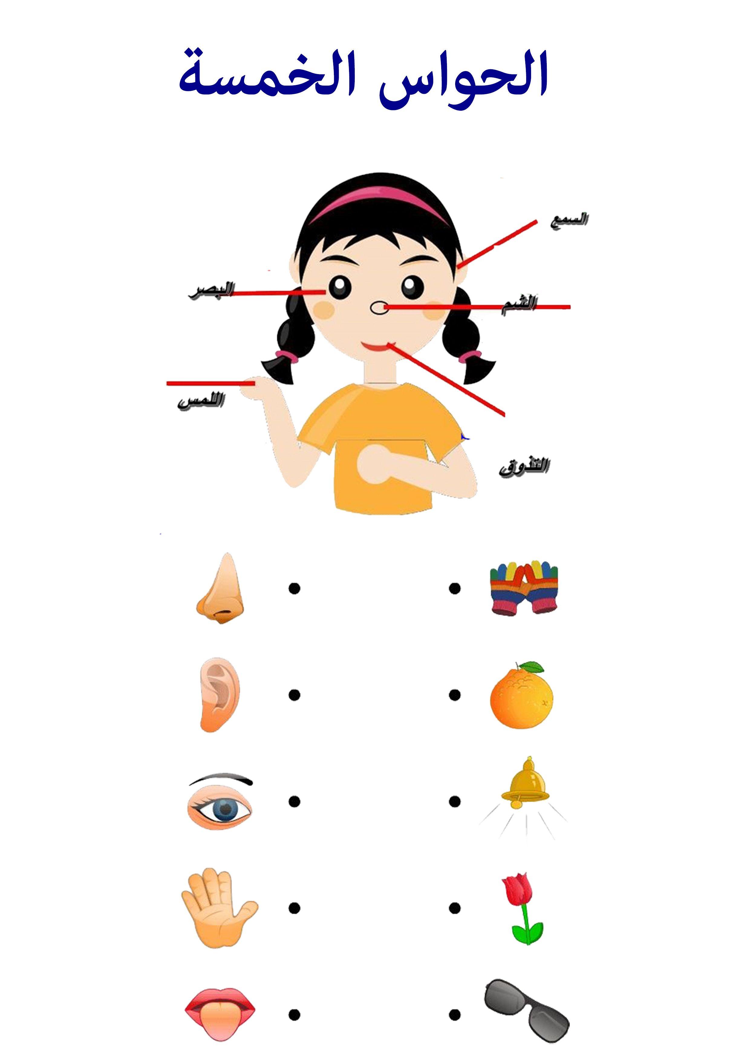 الحواس الخمسة 5 senses | work sheets for children | Pinterest