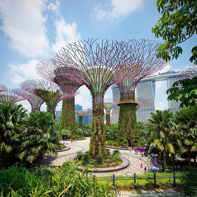 6529bc97102dcb3b1fbd9f52af033cc2 - Captions For Gardens By The Bay