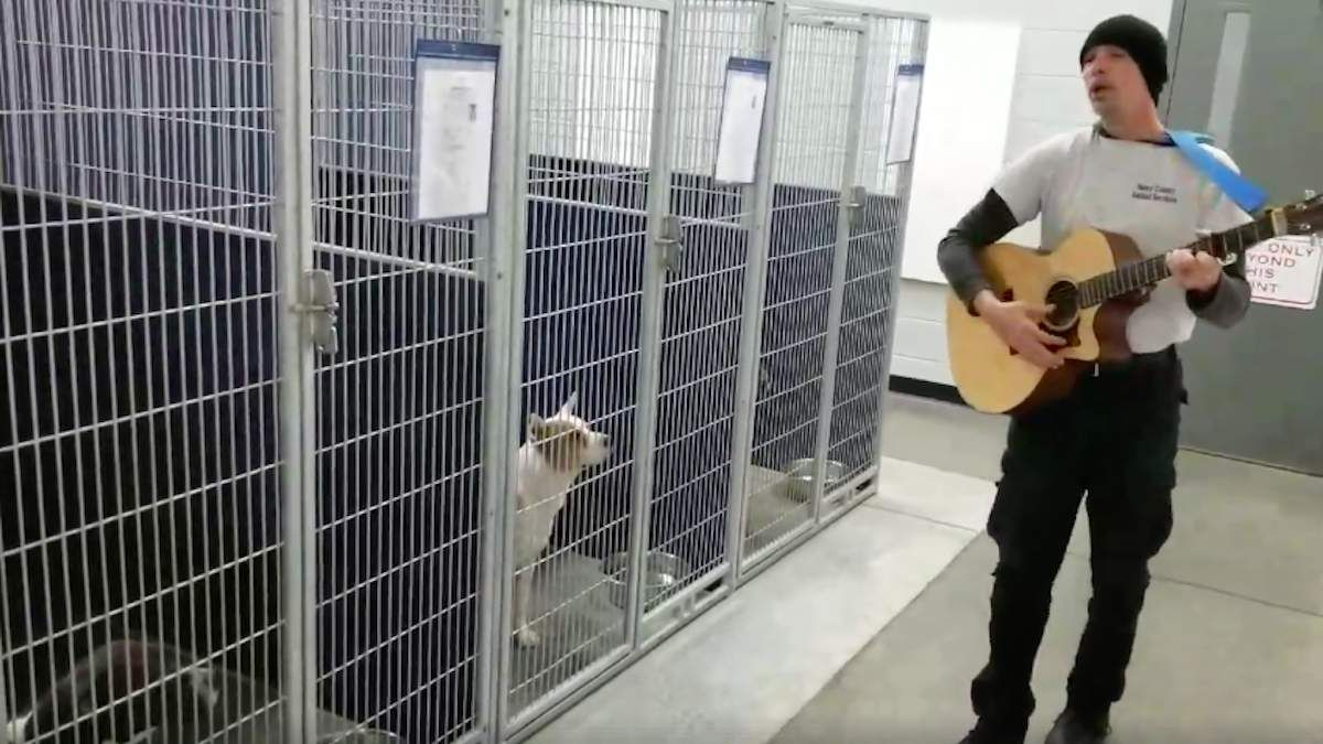 Officer Serenades Homeless Dogs At Shelter And They Have The