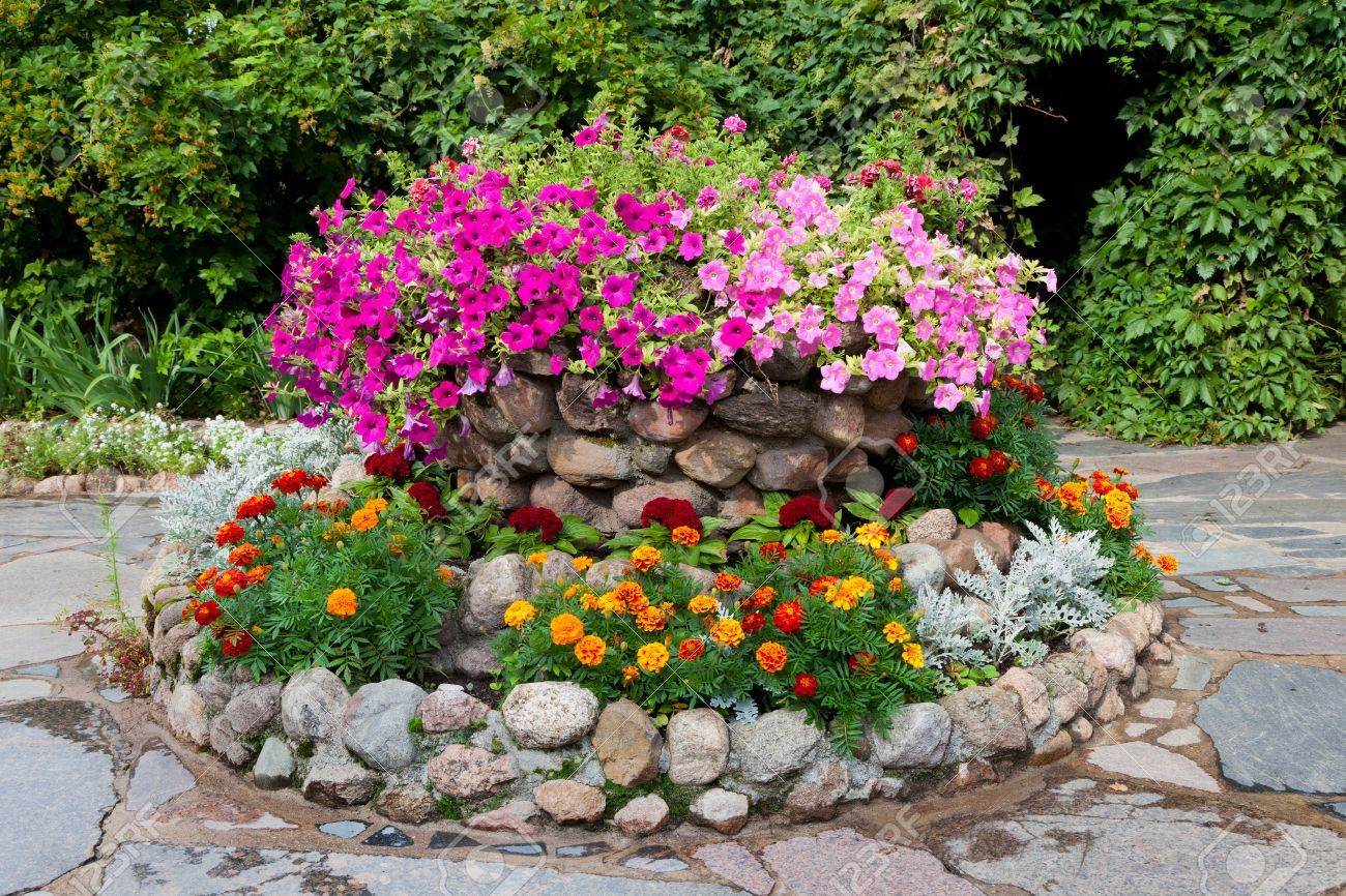 Garden Design With Flower Bed With Petunia And Marigold Landscape Design Stock Photo With Outdoor Lan Stone Flower Beds Garden Flower Beds Flower Bed Designs