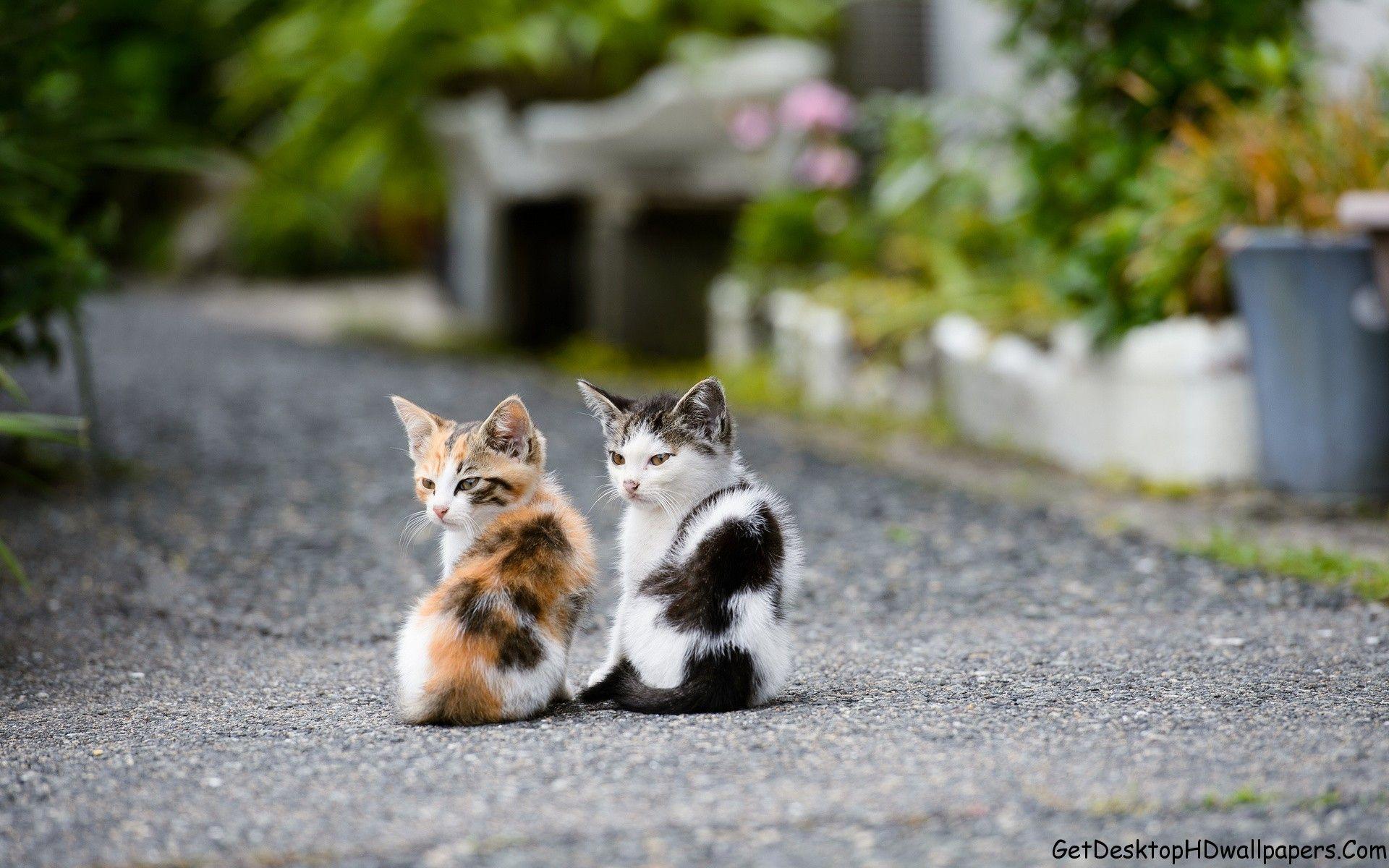 Hd Computer Animal Wallpaper Twins Cat Birds Animals Hd Wallpapers Desktop Hd Wallpapers 1920 X Kittens Cutest Beautiful Cats Cute Cats