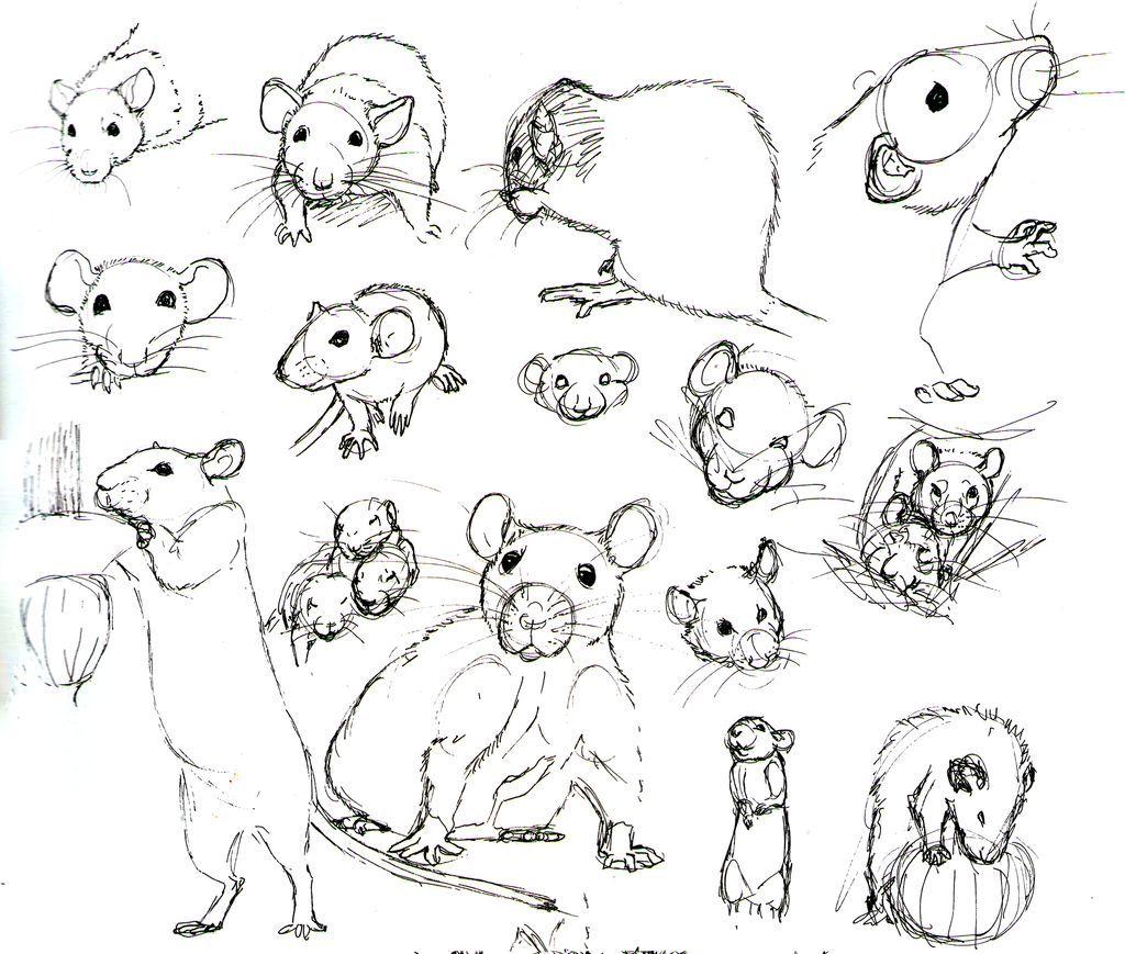 Résultats de recherche d\'images pour « ratas anatomía dibujar ...
