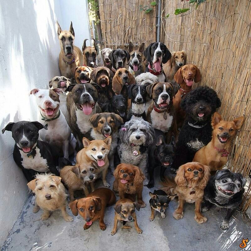 A whole lot of Doggies :))